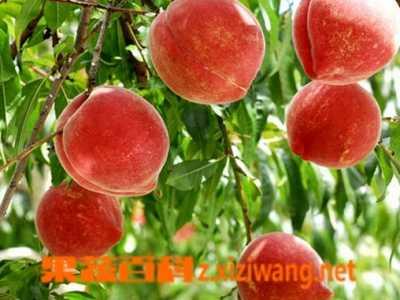 孕妇能不能吃桃子 孕妇可不可以吃桃子