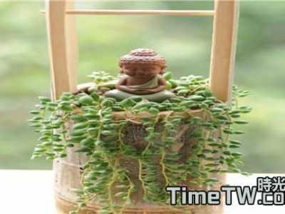 多肉珍珠吊兰怎么繁殖 不得不知的珍珠吊蘭的一些繁殖方式的具體介紹